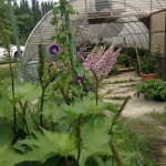 Our greenhouses are open to the public in Spring